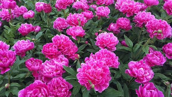 Flower20180504